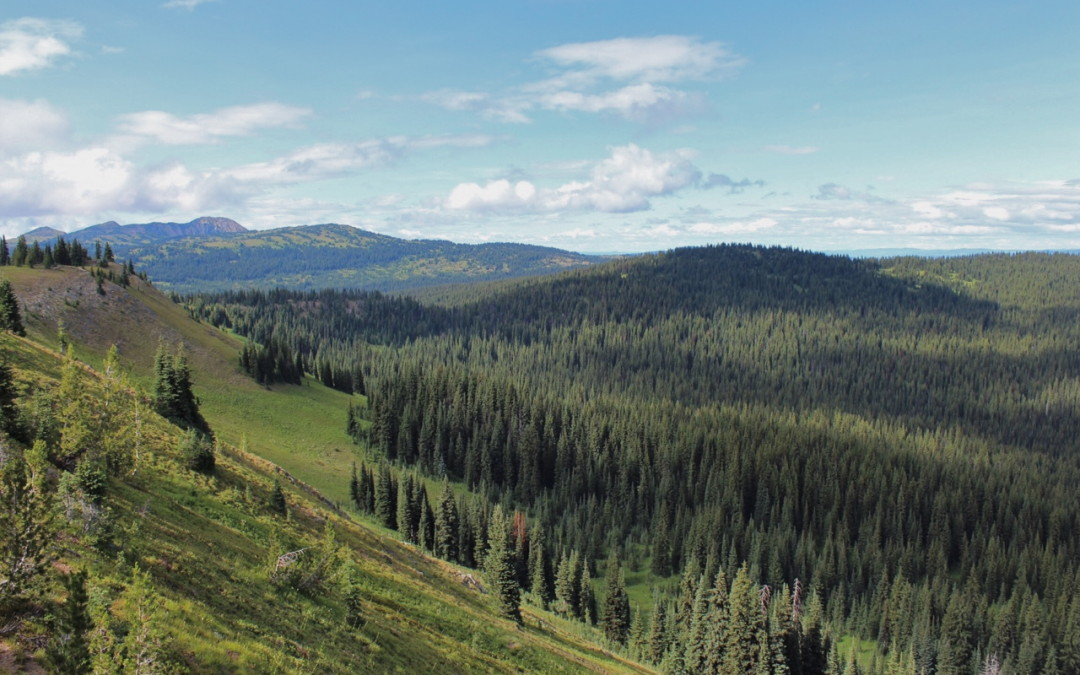 The Playground Called Manning Park